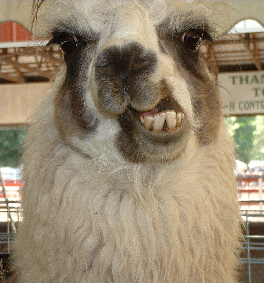 Mentally Retarded Llama